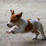 prevention_pediatrique_chien2